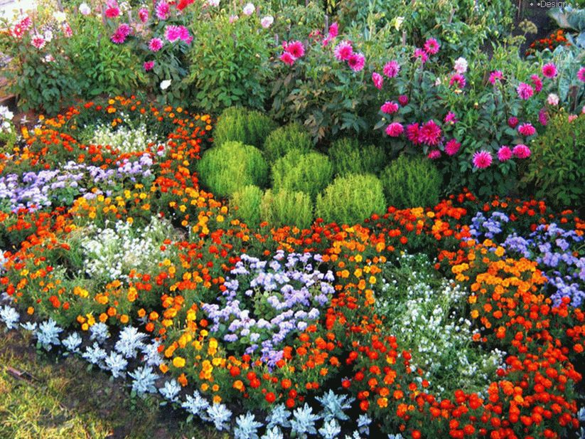 design flower beds